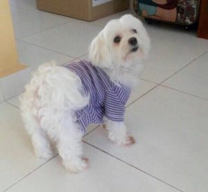 Health Clothing for Pets